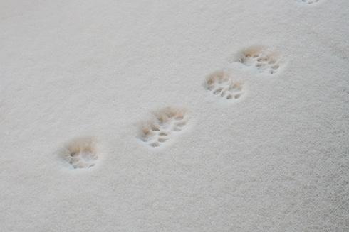 de la neige en mars