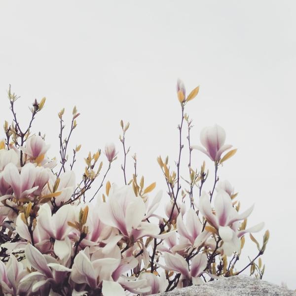 vacances printanière ° sous les arbres en fleur