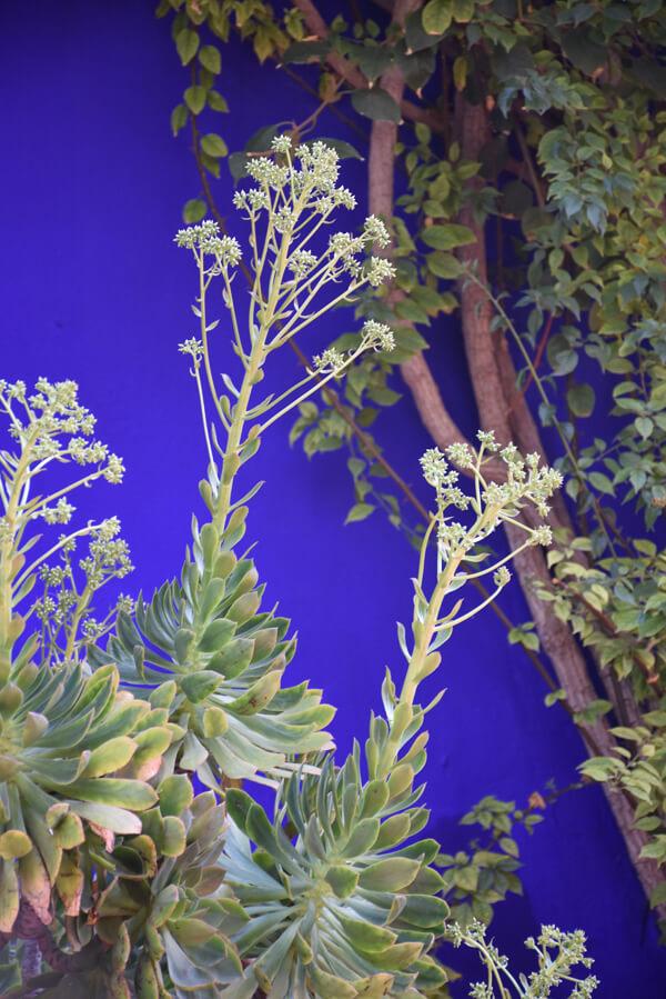 Marrakech jour 2 ° le jardin Majorelle