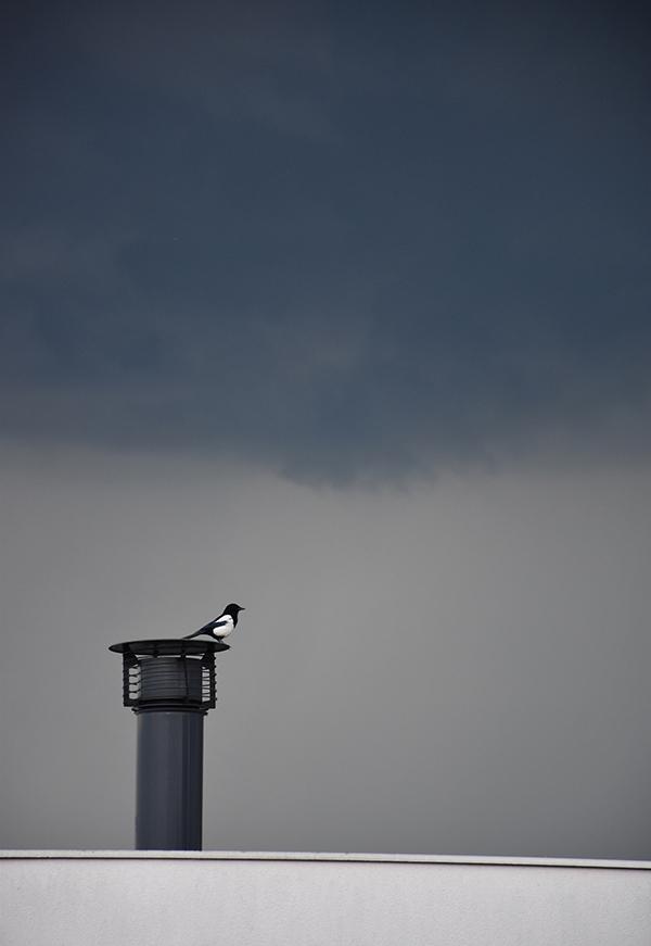 La pie qui attendait l'orage